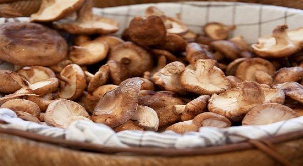 Slavonien_gastronomi_6_600