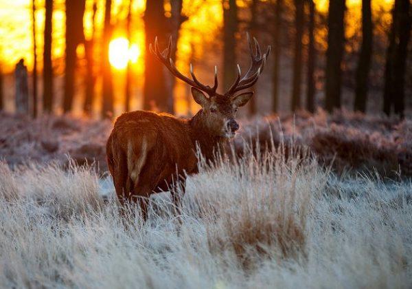 Očuvanje prirode